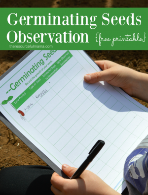 Seed Germination Observation for Kids {Free Printable}