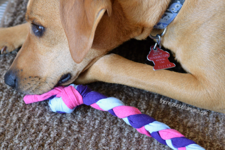 Upcycled DIY Dog Toys
