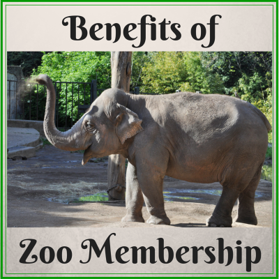Zoo Membership & Free Printables