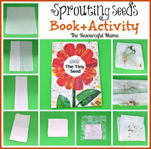 Book+Activity The Tiny Seed & Seed Sprouting with Sandwich Baggies~theresourcefulmama.com