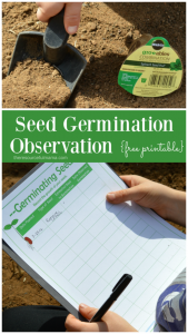 Free printable seed germination observation worksheet. Fun and educational gardening activity for kids.