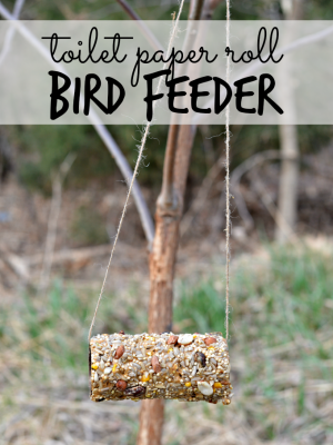 Easy Toilet Paper Roll Bird Feeder Craft