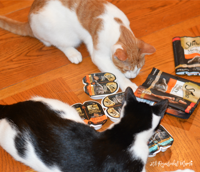 Cats are checking out their SHEBA® PERFECT PORTIONS™