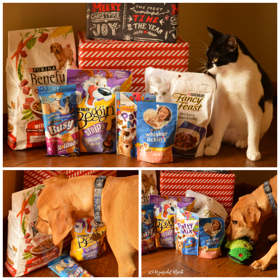 pets-with-treats-square-collage